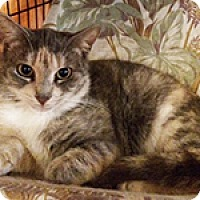 Adopt A Pet :: Molly - Metairie, LA
