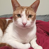 Adopt A Pet :: Ace - Alameda, CA
