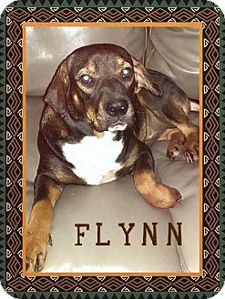 Shar Pei/Hound (Unknown Type) Mix Dog for adoption in Enid, Oklahoma - Flynn
