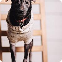 Adopt A Pet :: Melanie - Portland, OR
