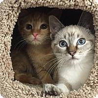 Adopt A Pet :: Spock & Bones - Horsham, PA