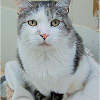 Adopt A Pet :: Tigger - Corinne, UT