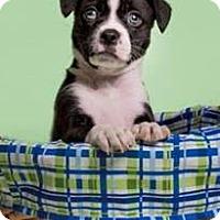 Adopt A Pet :: Daisy - Big Canoe, GA