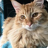 Adopt A Pet :: Kevin - Arlington/Ft Worth, TX