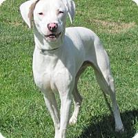 Adopt A Pet :: Maverick - Batavia, OH