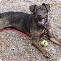 Adopt A Pet :: Susie - Voorhees, NJ