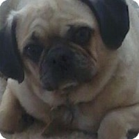 Adopt A Pet :: Sasha - Strasburg, CO