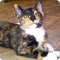 Adopt A Pet :: Kiki - Escondido, CA