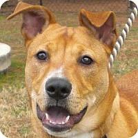 Adopt A Pet :: Toby - Athens, GA