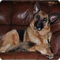 Adopt A Pet :: Heidi - Hamilton, MT