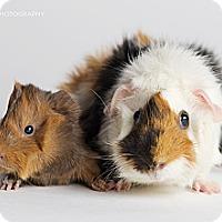 Adopt A Pet :: Stella & Anna - Brooklyn Park, MN