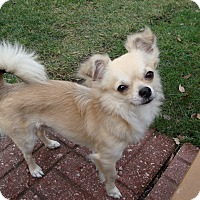 Adopt A Pet :: Todd - Dayton, OH
