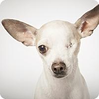 Adopt A Pet :: Buster - New York, NY