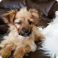 Adopt A Pet :: Ragen - Grass Valley, CA