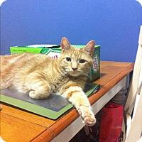 Adopt A Pet :: Jerry - Leamington, ON