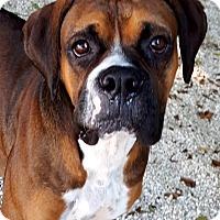 Adopt A Pet :: Bart - Key Largo, FL
