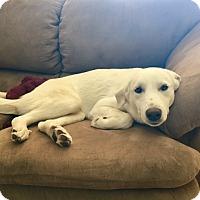 Adopt A Pet :: Gypsum - Evergreen, CO