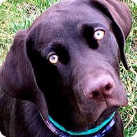 Adopt A Pet :: MAX(LOST HIS FAMILY--PLS READ! - Wakefield, RI