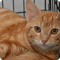 Adopt A Pet :: 10309826 - Brooksville, FL
