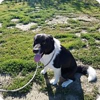 Adopt A Pet :: GENE PERRY - Gustine, CA