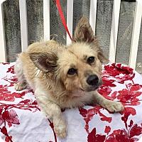 Adopt A Pet :: Jasmine (BH) - Santa Ana, CA