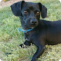 Adopt A Pet :: Abilene - Surprise, AZ