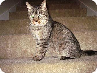 Domestic Shorthair Cat for adoption in Homewood, Alabama - Penelope