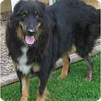 Adopt A Pet :: Wolfie - San Diego, CA