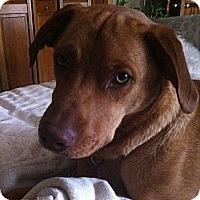 Adopt A Pet :: Brewer - Minnetonka, MN