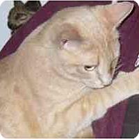 Adopt A Pet :: Rawhide - Fayette, MO