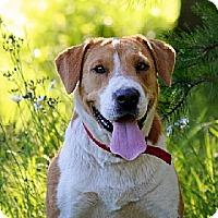 Adopt A Pet :: CLEO - Scottsburg, IN