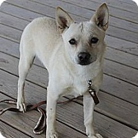 Adopt A Pet :: Howie - Fountain, CO
