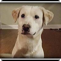 Adopt A Pet :: Gunner - Indian Trail, NC