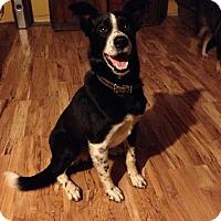 Adopt A Pet :: RYLEE - Nampa, ID