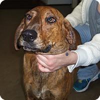 Adopt A Pet :: TESSA - Medford, WI