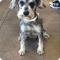 Adopt A Pet :: Captain Jack - San Francisco, CA