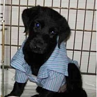 Adopt A Pet :: FOSTERS NEEDED - Sparta, NJ