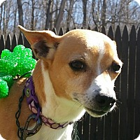 Adopt A Pet :: Smiley - Sparta, NJ