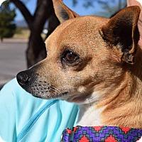 Adopt A Pet :: Nino - Sierra Vista, AZ