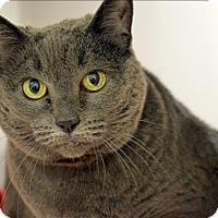 Adopt A Pet :: Torta - Oakland, CA