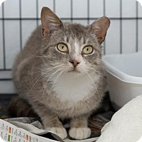 Adopt A Pet :: Evan (FCID# 4/6/17-1 Trainer Clinic) - Greenville, DE