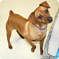 Adopt A Pet :: Lucy#2 - available 5/28 - Sparta, NJ