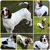 Adopt A Pet :: HUBERT - Inverness, FL