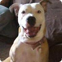 Adopt A Pet :: Jessi CP - Dayton, OH