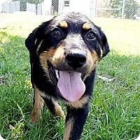 Adopt A Pet :: Kennedy - Savannah, GA