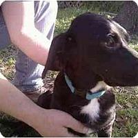 Adopt A Pet :: Charlie - Rosenberg, TX
