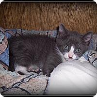 Adopt A Pet :: Cooper - WHAT A CUTIE PIE!! - South Plainfield, NJ