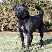 Adopt A Pet :: Ckoos - Ile-Perrot, QC