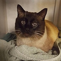 Adopt A Pet :: DC - Lakewood, CO