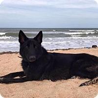 Adopt A Pet :: Panzer - Orlando, FL